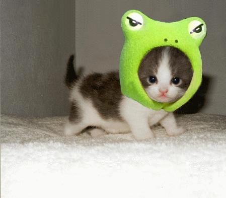 cute-kitty-frog2